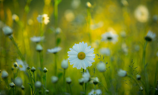 Happy Meadow | by lichtmaedel