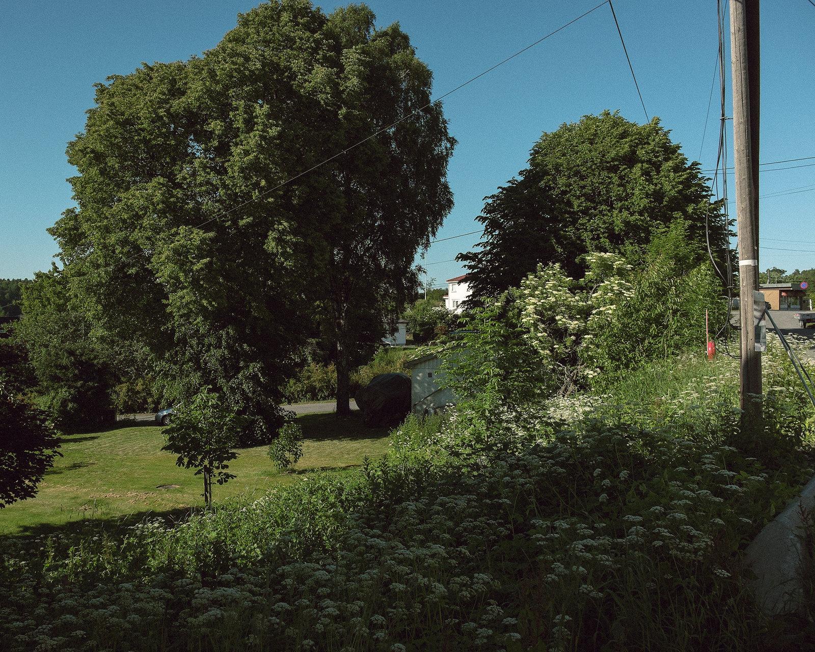 Summer, walking