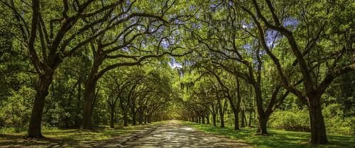 road georgia scenic plantation savannah hdr oaktrees forrestgump oakavenue wormsloehistoricsite noblejones