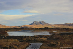 Sur la route, Islande (7)