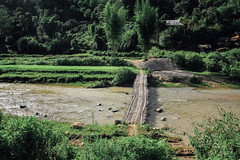 Bamboo Bridge, Lai Châu Vietnam