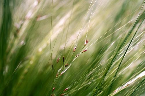 slr film nature austin garden 1 texas dof kodak bokeh olympus 35mmfilm wildflowers om 160vc om1 nativeplants shallowdepthoffield portra160vc ladybirdjohnsonwildflowercenter 50mmf35macro zuikomacro