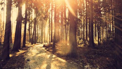 road trees sunlight nature sunshine forest sunrise landscape switzerland