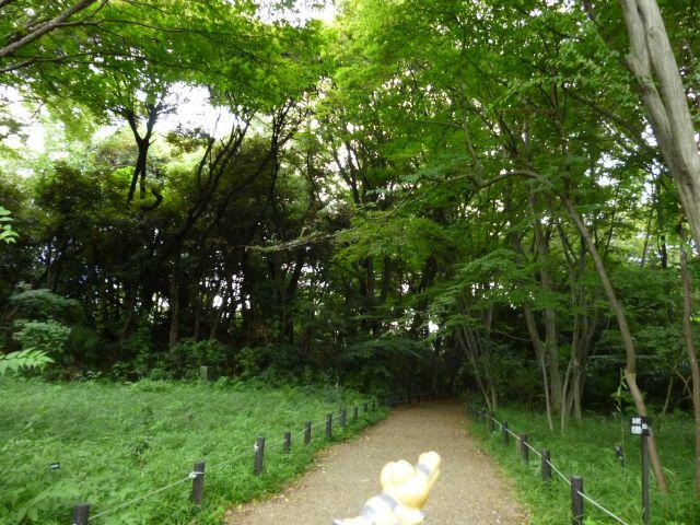 Sandile in Meguro, Tokyo 17 (The Institute for Nature Study)