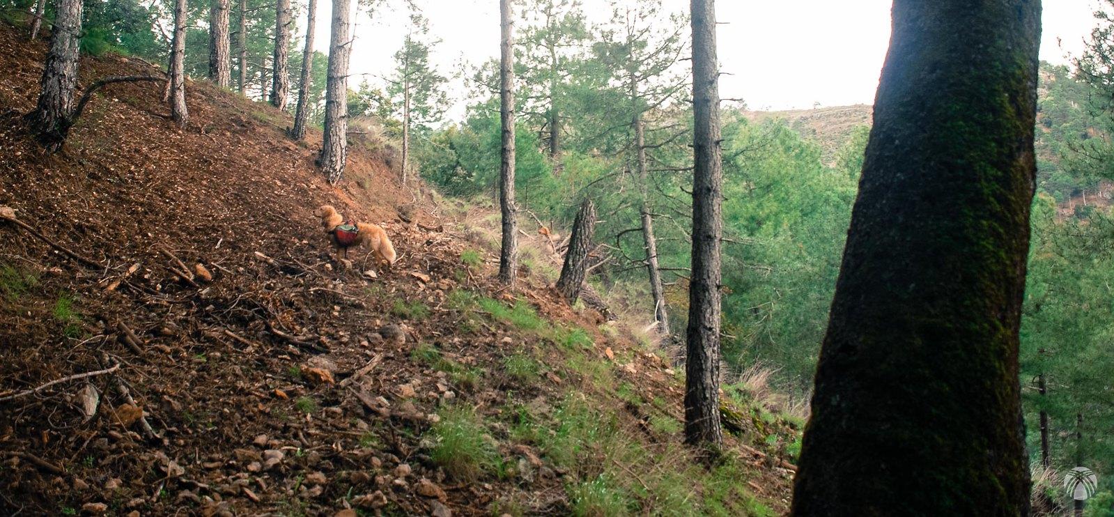 De lleno en el bosque cerca de la cuerda de la Campana