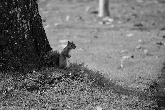 quiet squirrel