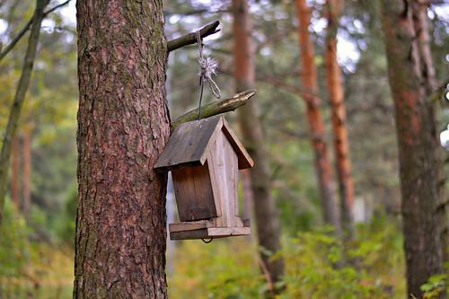 autumn wood forest bokeh finland flickr nature luonto syksy metsä landscape maisema mäntymetsä nikond3200 50mm nikkor dof depthoffield syyskuu trees lintulauta suomi larissadatsha naturephotography europe