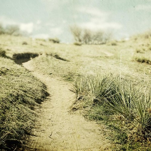 grass canon square sand path footprints trail overexposed fade depth yucca textured t1i applesandsisters