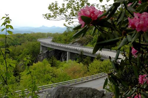 linvilleviaduct carolina flower bridge trees road rocks mountains ncmountainman nikon d70s dof spring phixe blueridgeparkway usa scenic scenicroads view overlook nationalgeographic rhododendron lowresolutionversion