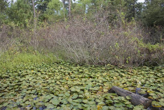 Houston Arboretum and Nature Center_25
