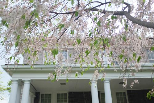 Spring at JMU