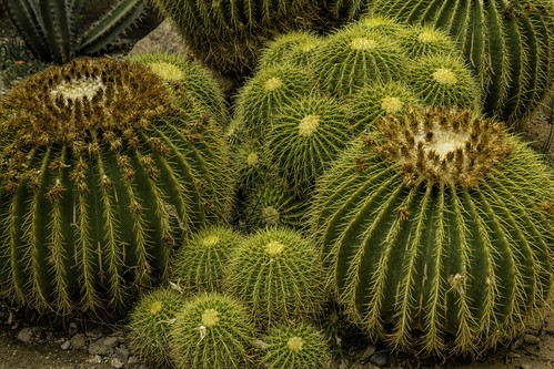 Cactus Bundle | by slarsen327