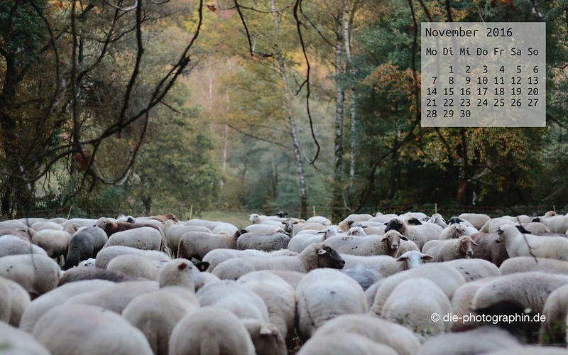 schafe_november_kalender_die-photographin