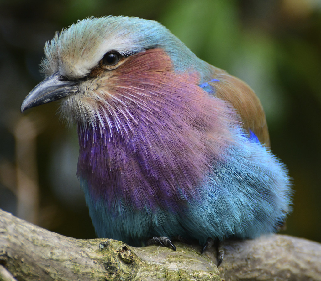 Image result for Tropical birds