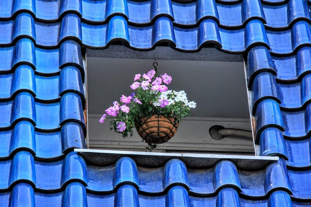 Window - Japan