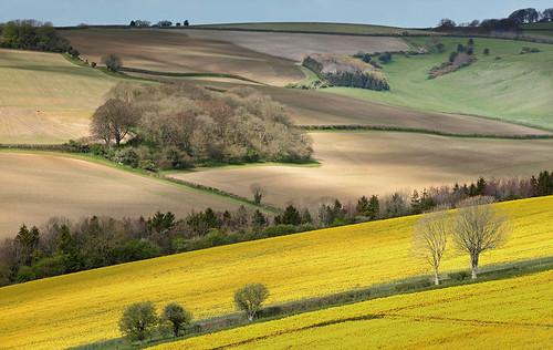 landscape dorset canola cernevalley
