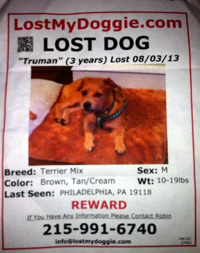 Find  their doggie Truman | by buhrayin