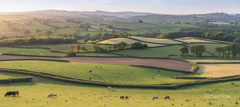 Devon Livestock