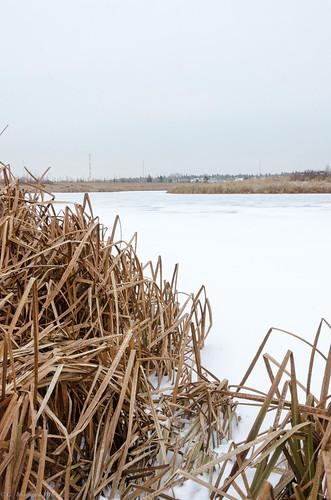 loisholecentennialprovincialpark reeds stalberta alberta sky canada powerpoles snow sturgeoncounty ice