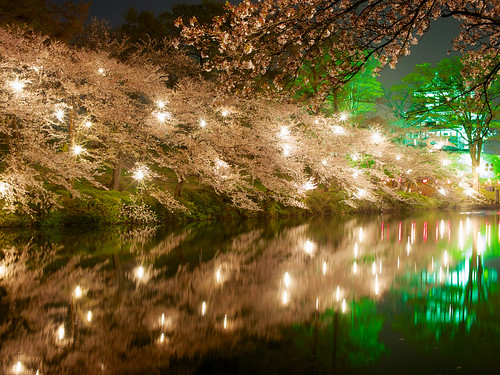 longexposure travel light vacation holiday plant flower tree tourism nature water beautiful japan night dark japanese pond asia pretty view time personal culture illumination nobody nighttime 桜 cherryblossom 日本 flowering sakura moat hanami temporal blooming 花見 cherryblossomviewing nolens japanesecastle 新潟県 niigataprefecture photospecs stockcategories 高田城 上越市 高田公園 takadacastle joetsucity springapril2013 jōetsushi takadakoencherryblossomfestival