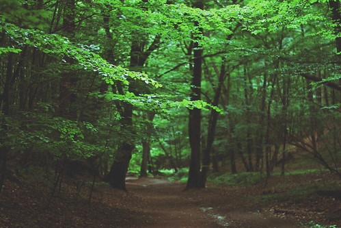 green leaves forest canon catchycolors eos 50mm dof bokeh path poland 18 gdynia 650d 18mp