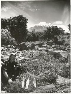 Trout Fishing  in the Kaupokonui River, Kaponga, Taranaki (1958)