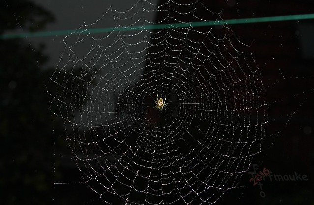 Spider Night