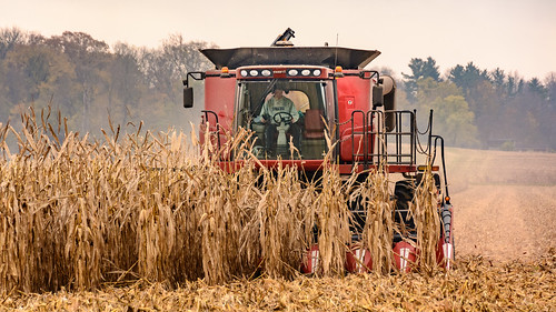 case ih indiana middleboro red waynecounty agriculture combine corn farm farmer rural waynet camera:model=nikond7100 geocountry exif:make=nikoncorporation geo:lat=398975 exif:focallength=130mm exif:lens=tamronaf18270mmf3563diiivcpzdb008n geostate geocity exif:model=nikond7100 geolocation geo:lon=84823611111112 exif:isospeed=400 exif:aperture=ƒ60 camera:make=nikoncorporation