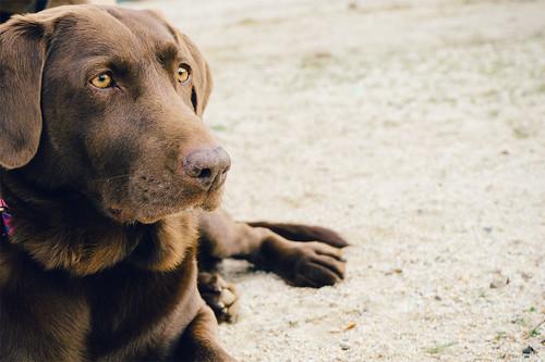 Kutyakozmetikai szolgáltatások