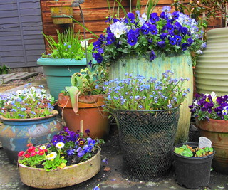 Recycled garden containers | by scrappy annie