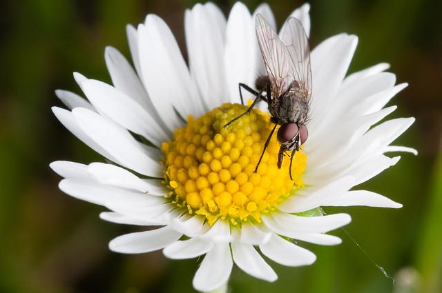 Fly, standing still