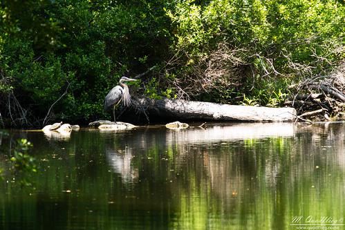 statepark usa nature river florida crystal