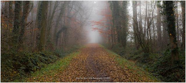 Forest Mist, Netherlands