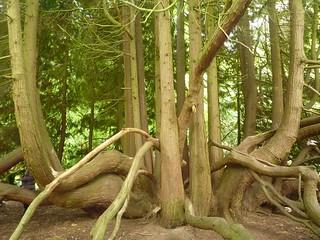 Arbre arboretum Grand Fougeray