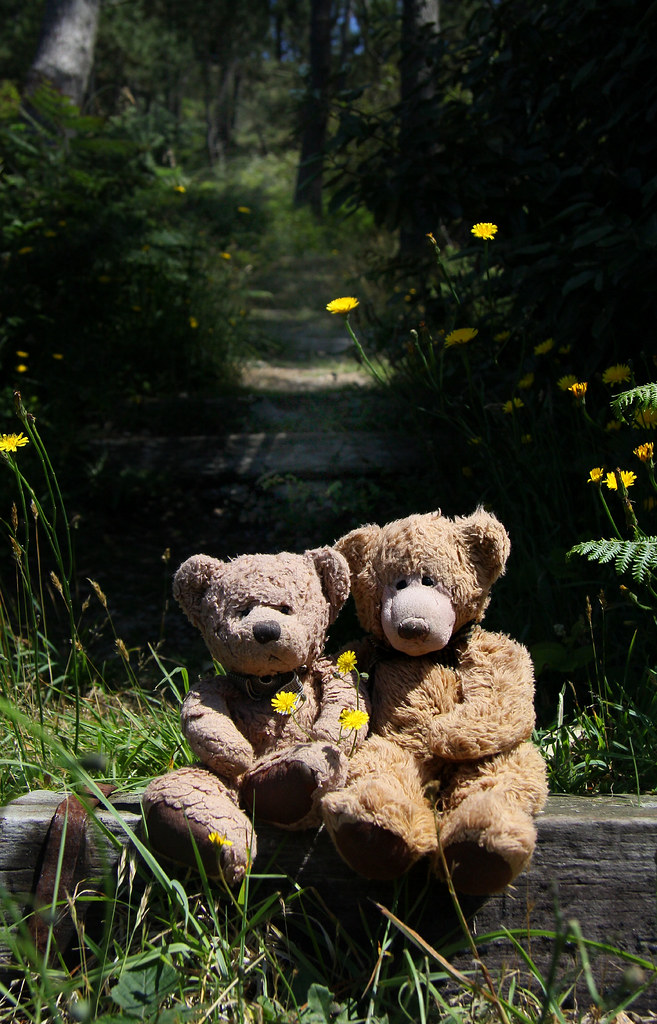 Westerbears in the Breton woods