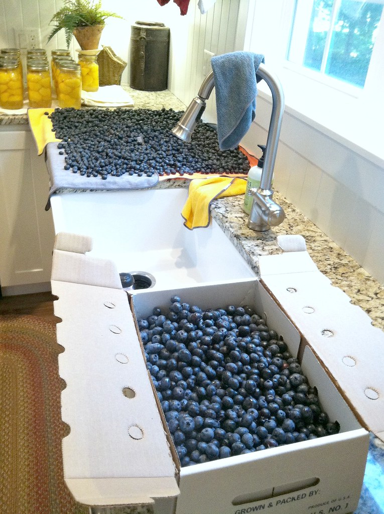 so many delicious blueberries