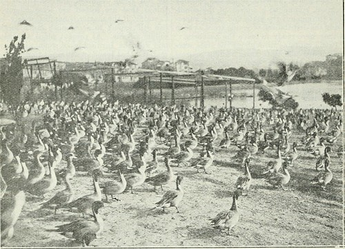 "Image from page 197 of ""California fish and game"" 