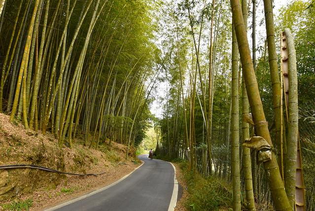 [Bamboo Path]