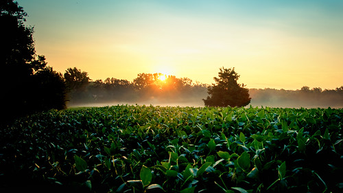 mist green field yellow fog sunrise gold virginia countryside farm country