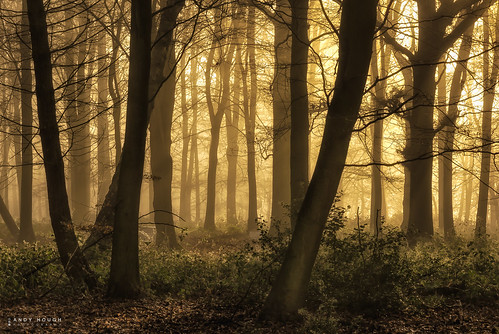 wood trees sunlight mist misty sunrise woodland outdoor sony a77 sonyalpha andyhough slta77 norcotwood sonyzeissdt1680 andyhoughphotography