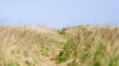 grass bluesky nature path oceanshores pacificnorthwest canoneos5dmarkiii canon135mmf2lusm depthoffield washington