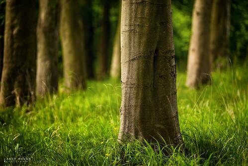 wood england green grass woodland spring warm unitedkingdom sony warmth gb tamron beech wallingford southoxfordshire a99 sonyalpha andyhough slta99v littlewittenhamwood andyhoughphotography tamronsp70200di