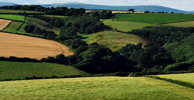 Fields near Bigbury