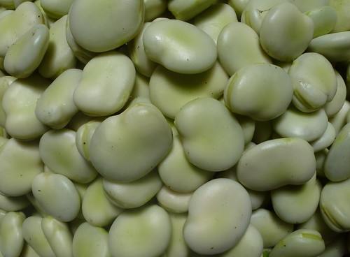 Broad beans... | by pamsai, 200K views, thank you