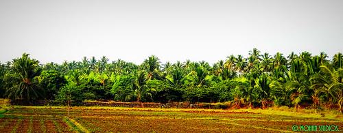 india tamilnadu annamalaipatti