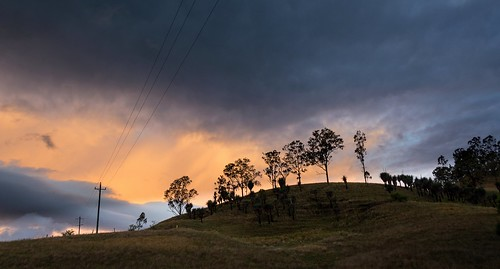 skyline silhouettes sunsetclouds sunlitclouds landscape hillside grasstrees oldgrevillea richmondvalley northernrivers nsw australia australianlandscape