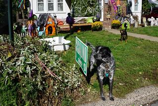 Canine FreeWalkers?