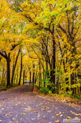 fall autumn leaves cabin road landscape mn minnesota minnesotalandscapearboretum canon vonwahlde
