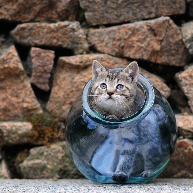> Small fish in its bowl <