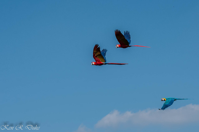 Welt Vogel Park Walsrode, Finale Freiflug Schau